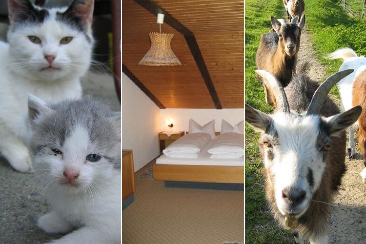 Urlaub | Ruhe | Natur | Bauernhof